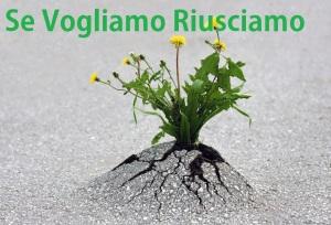 flower-tree-growing-concrete-pavement-191 (1)